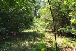 Autauga County 116 acre Home/Hunting/Rec Tract in Autauga, AL (5 of 15)