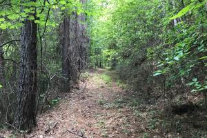 Autauga County 116 acre Home/Hunting/Rec Tract in Autauga, AL (14 of 15)