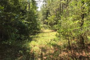 Autauga County 116 acre Home/Hunting/Rec Tract in Autauga, AL (6 of 15)