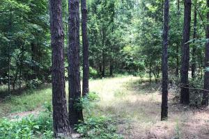 Autauga County 116 acre Home/Hunting/Rec Tract in Autauga, AL (11 of 15)