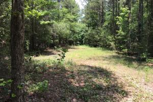 Autauga County 116 acre Home/Hunting/Rec Tract in Autauga, AL (9 of 15)