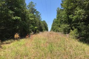 Autauga County 116 acre Home/Hunting/Rec Tract in Autauga, AL (8 of 15)
