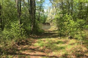 Kelly Hunting and Recreational Land River Access - Bladen County NC
