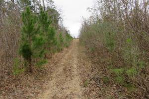 40 acre cutover hunting/homesite tract in Rankin, MS (4 of 5)