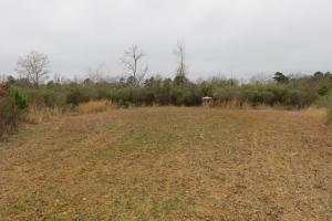 40 acre cutover hunting/homesite tract in Rankin, MS (3 of 5)