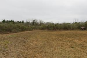 40 acre cutover hunting/homesite tract in Rankin, MS (2 of 5)