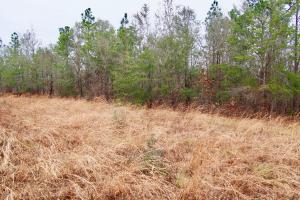 Mud Hill Hunting-Timber Investment-Homesite in Washington, FL (6 of 16)