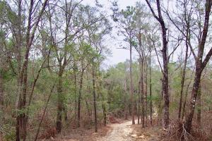 Mud Hill Hunting-Timber Investment-Homesite in Washington, FL (15 of 16)