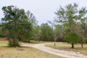 Mud Hill Hunting-Timber Investment-Homesite in Washington, FL (3 of 16)