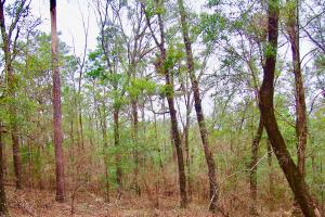 Mud Hill Hunting-Timber Investment-Homesite in Washington, FL (14 of 16)