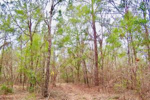 Mud Hill Hunting-Timber Investment-Homesite in Washington, FL (10 of 16)