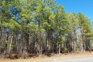 Mt. Coney Road/Midway Recreational Tract in Bullock, AL (3 of 7)