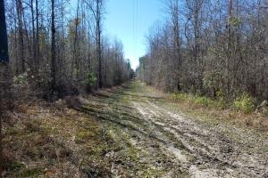 Mt. Coney Road/Midway Recreational Tract in Bullock, AL (5 of 7)