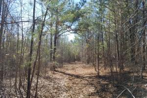 Mt. Coney Road/Midway Recreational Tract - Bullock County AL