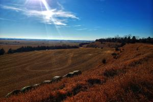 Platte River Valley Acreage Site, 19 +/- Acres of Alfalfa (3 of 6)