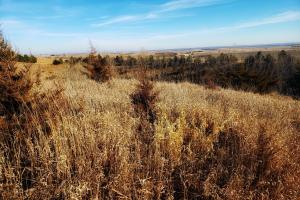 Platte River Valley Acreage Site,  44+/- Acres (6 of 6)