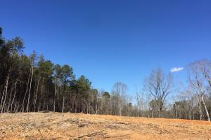 Co Rd 86 Pasture Hunting or Recreational Tract in Shelby, AL (6 of 14)