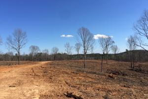 Co Rd 86 Pasture Hunting or Recreational Tract in Shelby, AL (14 of 14)