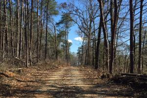 Co Rd 86 Pasture Hunting or Recreational Tract - Shelby County AL