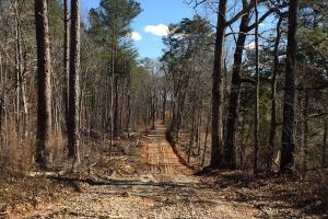 Co Rd 86 Pasture Hunting or Recreational Tract in Shelby, AL (2 of 14)
