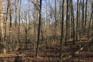 Loudon County Residential Lot in Loudon, TN (3 of 9)