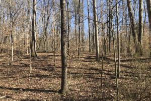 Old Sugarlimb Wooded Residential Property in Loudon, TN (6 of 12)
