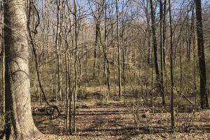 Old Sugarlimb Wooded Residential Property in Loudon, TN (9 of 12)