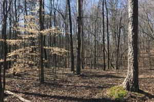 Old Sugarlimb Wooded Residential Property in Loudon, TN (8 of 12)