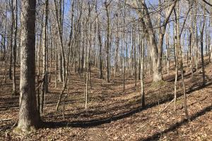 Old Sugarlimb Wooded Residential Property in Loudon, TN (12 of 12)
