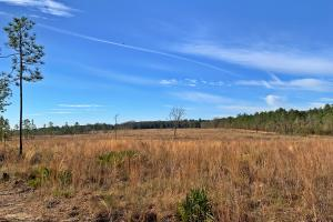 Old Citronelle Road Homesite Tract A - Mobile County AL