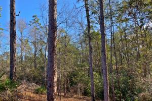 Old Citronelle Road Homesite Tract B in Mobile, AL (9 of 12)