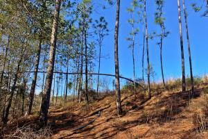 Old Citronelle Road Homesite Tract B in Mobile, AL (8 of 12)