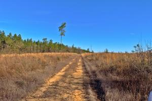 Old Citronelle Road Homesite Tract B in Mobile, AL (4 of 12)