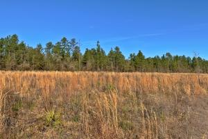 Old Citronelle Road Homesite Tract C in Mobile, AL (4 of 5)