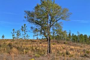 Old Citronelle Road Homesite Tract C - Mobile County AL