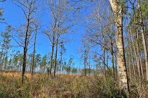 Old Citronelle Road Hunting Recreational and Farm Tract in Mobile, AL (16 of 19)