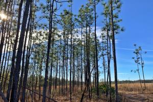 Old Citronelle Road Hunting Recreational and Farm Tract in Mobile, AL (12 of 19)