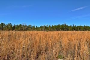 Old Citronelle Road Hunting Recreational and Farm Tract in Mobile, AL (10 of 19)