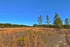 Old Citronelle Road Hunting Recreational and Farm Tract in Mobile, AL (7 of 19)
