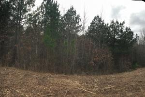 52.3 Acre Tract Byhalia in DeSoto, MS (19 of 19)