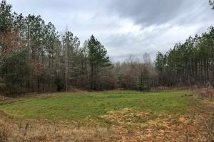 Notasulga Timber Investment and Rec Tract - Macon County AL