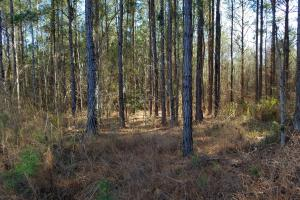 Perote Timber & Hunting Tract - Bullock County AL