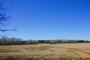 Bear Creek Farm in Wilcox, AL (3 of 13)