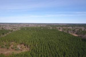 106 Acre Hunting/Timber Tract in Polk, TX (2 of 20)
