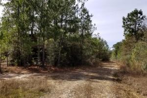 106 Acre Hunting/Timber Tract in Polk, TX (17 of 20)