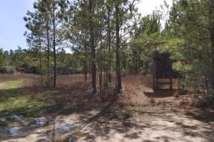 106 Acre Hunting/Timber Tract in Polk, TX (4 of 20)
