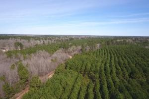 106 Acre Hunting/Timber Tract in Polk, TX (11 of 20)