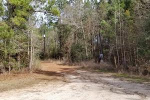 106 Acre Hunting/Timber Tract in Polk, TX (10 of 20)