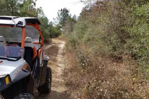106 Acre Hunting/Timber Tract in Polk, TX (5 of 20)