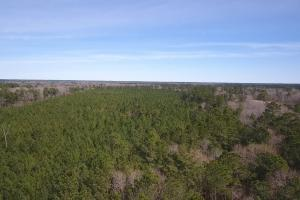 106 Acre Hunting/Timber Tract in Polk, TX (7 of 20)